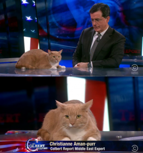 Picture of LOL Cat Christianne Aman-purr on the Colbert Report