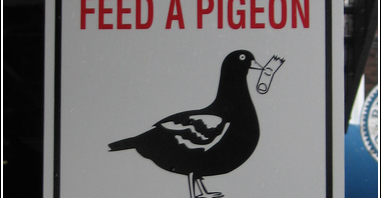Warning: Feed a Pigeon, Lose a Finger