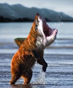 BEAR-SHARK!