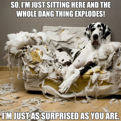 Dog: So, I'm just sitting here and the whole dang thing explodes!